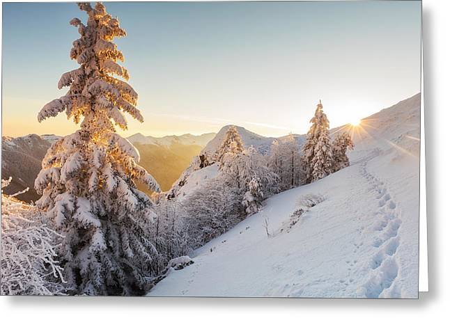 Golden Winter Greeting Card by Evgeni Dinev
