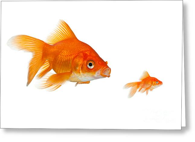 Bowl Of Food Greeting Cards - Goldfish Greeting Card by Phillip Hayson