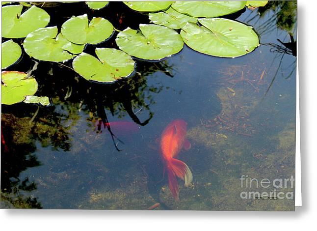 Goldfish Pond Greeting Card by Corey Ford
