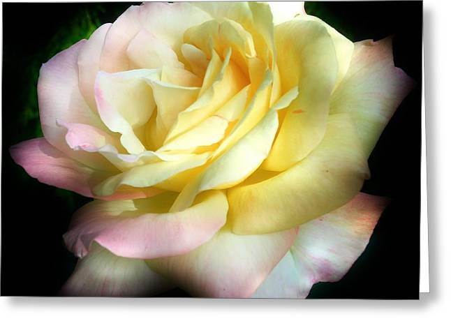Rose Petals Greeting Cards - Gone but not Forgotten Greeting Card by Bruce Bley