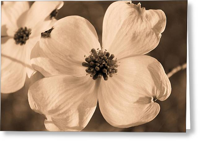 Dogwood Blossom Greeting Cards - Good Friday Greeting Card by Kristin Elmquist