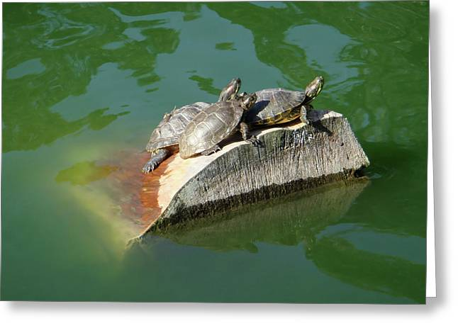 Turtle Shell Greeting Cards - Good Friends Greeting Card by Donna Blackhall