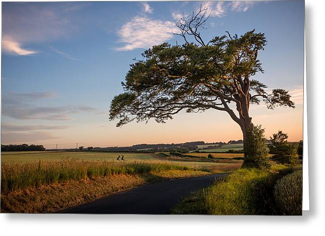 Lone Greeting Cards - Good looking tree Greeting Card by Ian Hufton