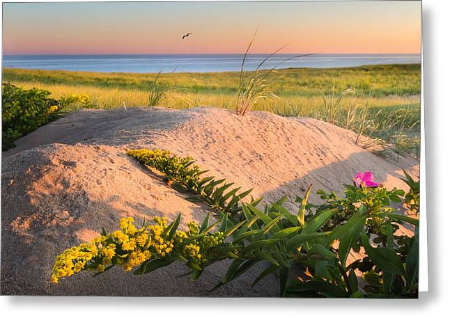 Good Morning Cape Cod Greeting Card by Bill Wakeley