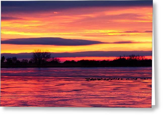 Sunset Prints Greeting Cards - Good Morning Geese Greeting Card by James BO  Insogna
