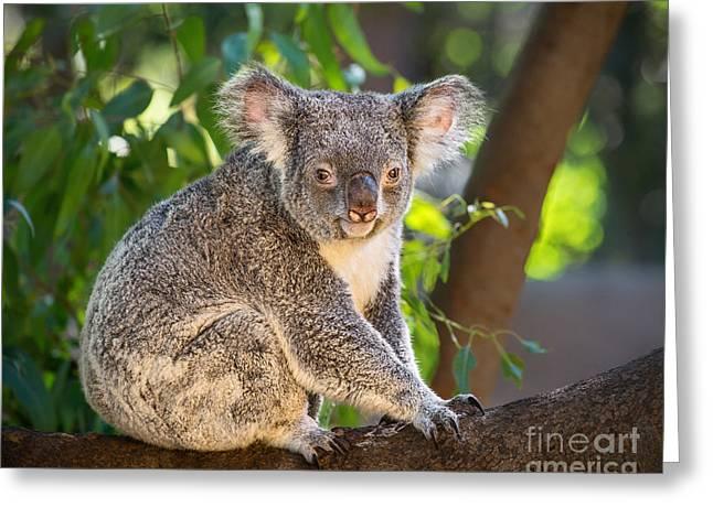 Good Morning Koala Greeting Card by Jamie Pham