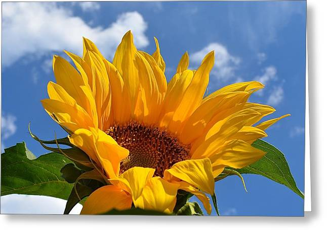 Yellow Sunflower Greeting Cards - Good Morning Sunshine 2 Greeting Card by Lisa  Telquist