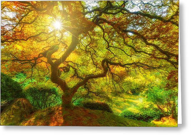 Fine Art White Nature Trees Greeting Cards - Good Morning Sunshine Greeting Card by Darren  White
