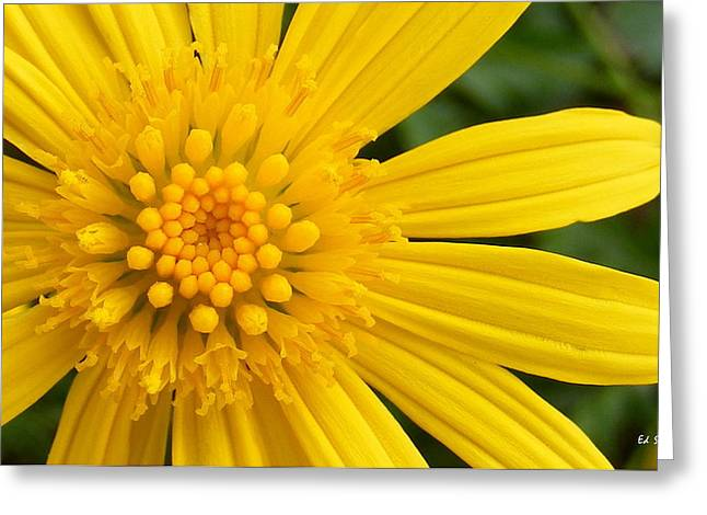 Indiana Flowers Greeting Cards - Good Morning Sunshine Greeting Card by Ed Smith