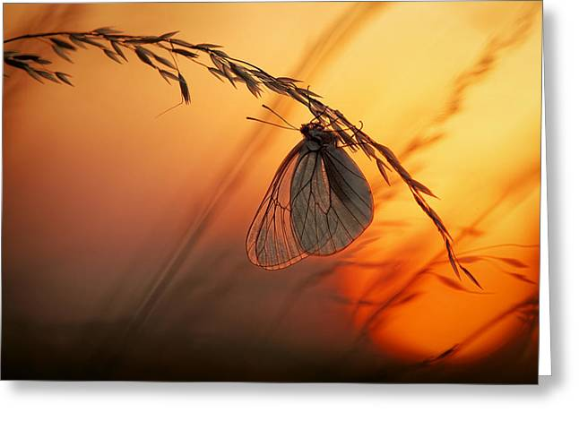White Butterfly Greeting Cards - Good Night Greeting Card by Francois Casanova