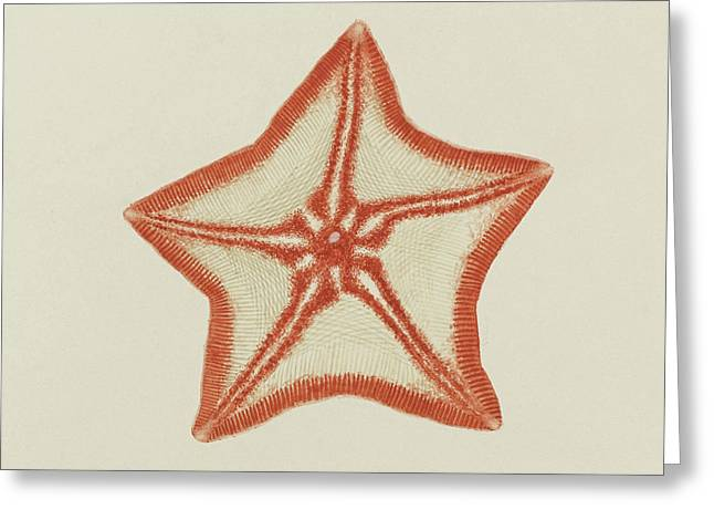Goose Foot Starfish Greeting Card by Philip Henry Gosse