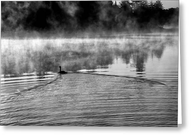 Mist On Lake Greeting Cards - Goose in the Mist Greeting Card by David Patterson