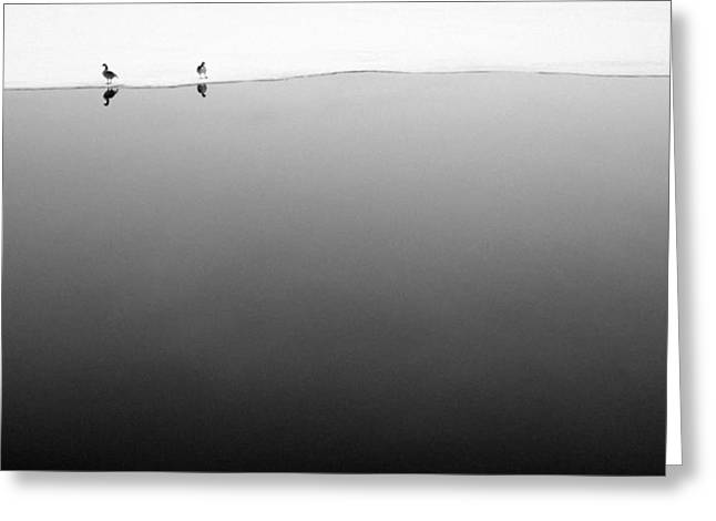 Geese Greeting Cards - Goose Love 2 Greeting Card by Wayne Stadler