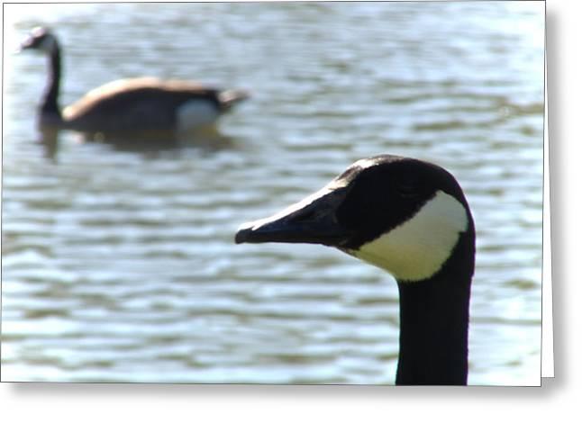 Hunting Bird Greeting Cards - Goose Pond Greeting Card by John Krenzer