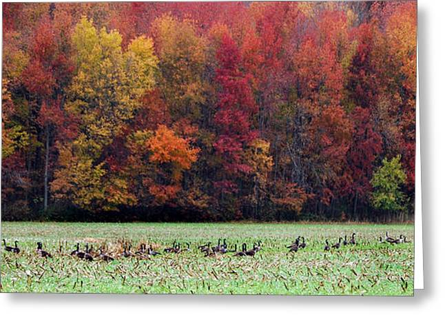 Md Greeting Cards - Goose Season Greeting Card by Skip Willits