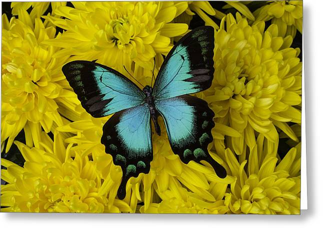 Gorgeous Greeting Cards - Gorgeous Butterfly Greeting Card by Garry Gay
