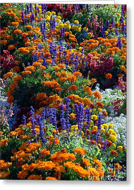Purchase Greeting Cards - Gorgeous Garden Greeting Card by Patrick Witz