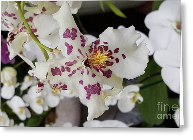 Bloosom Greeting Cards - Gorgeous Orhid Greeting Card by Jasna Gopic