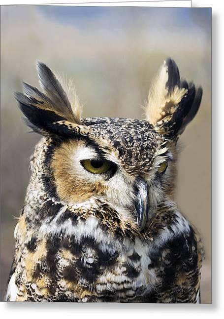 Moyers Greeting Cards - Gorgeous Owl at the Reservoir Greeting Card by Dana Moyer