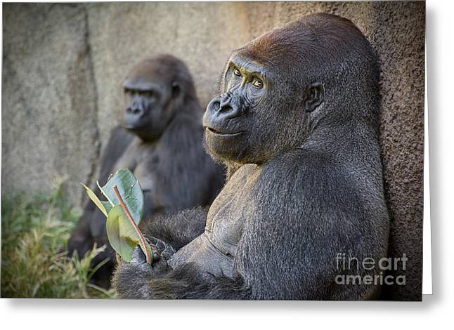 King Kong Greeting Cards - Gorilla Couple Greeting Card by Jamie Pham
