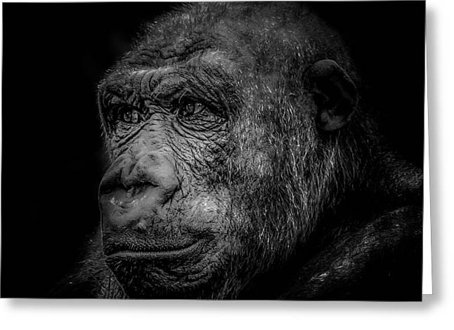 Award Greeting Cards - Gorilla in black and white Greeting Card by Xenia Headley