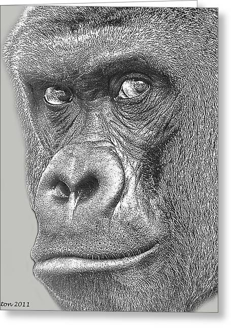 Ape. Great Ape Greeting Cards - Gorilla Portrait Greeting Card by Larry Linton