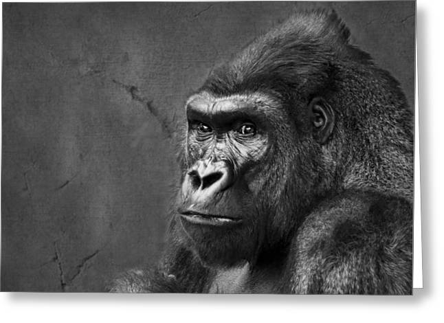 Male Dominated Greeting Cards - Gorilla Stare - Black and White Greeting Card by Nikolyn McDonald