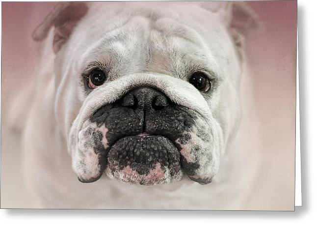 Artistic Photography Greeting Cards - Got Treat? Greeting Card by Jai Johnson