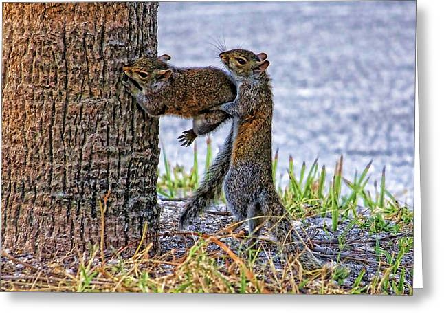Gotcha  Greeting Card by HH Photography of Florida