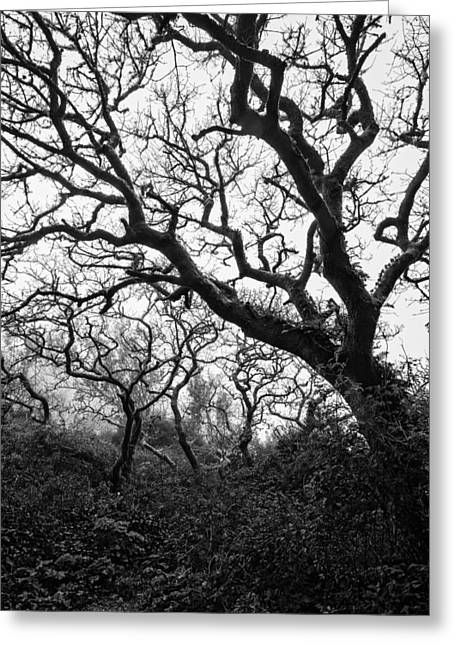 Gothic Trees Greeting Cards - Gothic Woods II Greeting Card by Marco Oliveira