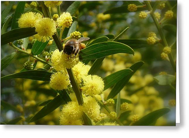 Australian Bees Greeting Cards - Gotta get me some o this Greeting Card by Esther Brueggemeier