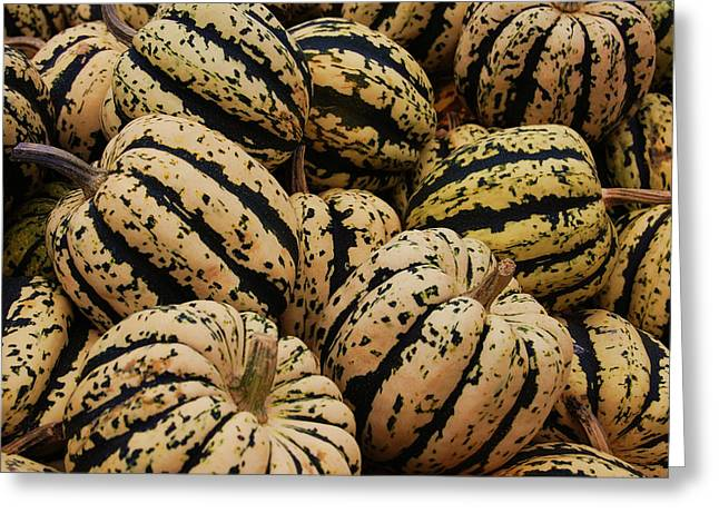 Jame Hayes Greeting Cards - Gourds in White and Green Greeting Card by Jame Hayes