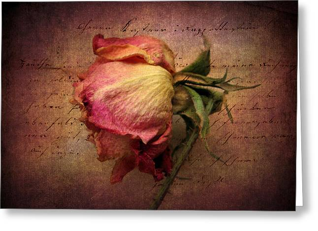 Rose Petals Digital Art Greeting Cards - Grace Greeting Card by Jessica Jenney
