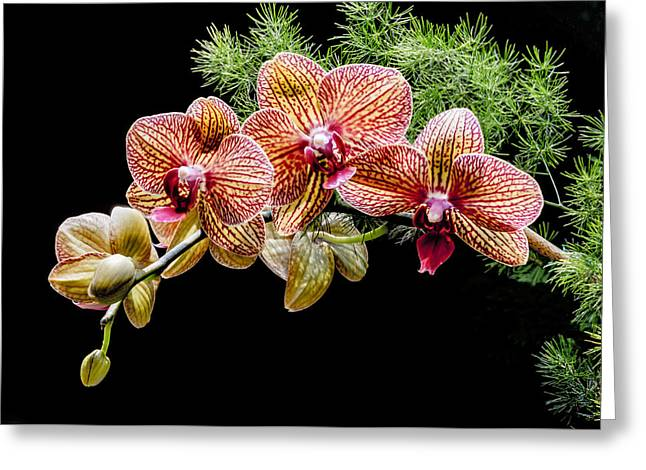 Graceful Beauty Greeting Card by Lindley Johnson