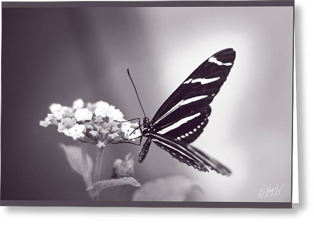 Biology Greeting Cards - Graceful Beauty - Monochrome Greeting Card by F Leblanc