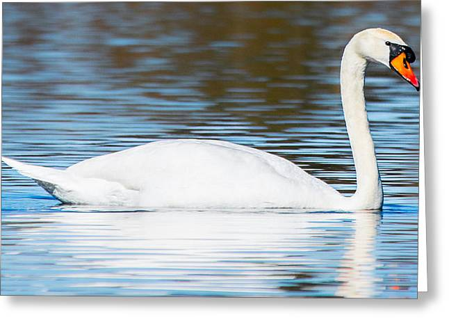 Reflection On Calm Pond Greeting Cards - Graceful Beauty Greeting Card by Parker Cunningham