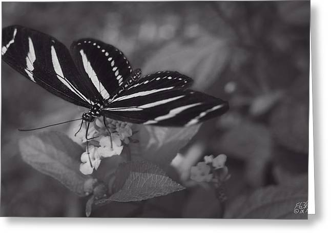 Flying Animal Greeting Cards - Graceful Gratitude - Monochrome Greeting Card by F Leblanc