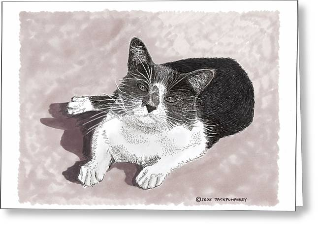Drawings Of Cats Greeting Cards - Gracie Jacks cat now Greeting Card by Jack Pumphrey