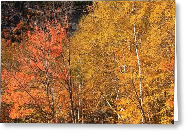 Grafton Greeting Cards - Grafton Notch Foliage Greeting Card by John Burk