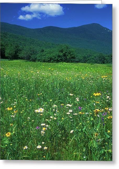 Grafton Greeting Cards - Grafton Notch Wildflower Meadow Greeting Card by John Burk