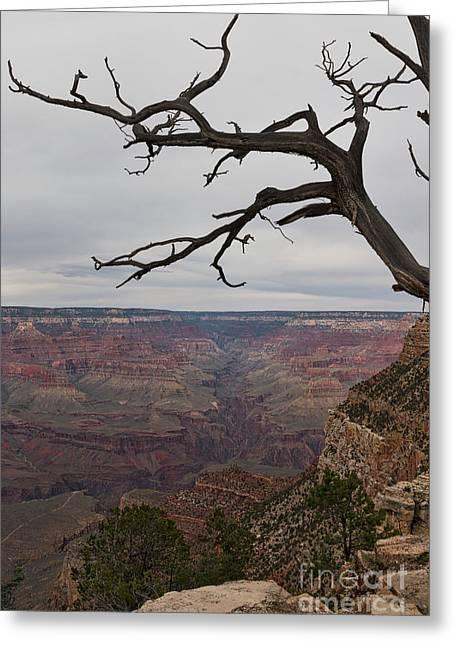 Grand Canyon Branches Greeting Card by Ana V Ramirez