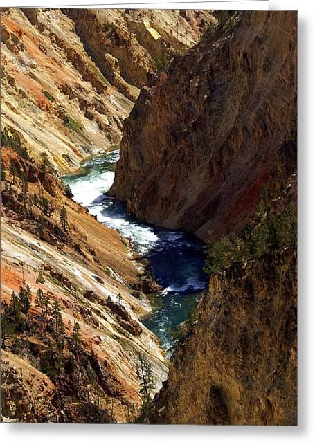 Marty Koch Greeting Cards - Grand Canyon of the Yellowstone 1 Greeting Card by Marty Koch