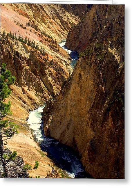Marty Koch Greeting Cards - Grand Canyon of the Yellowstone 2 Greeting Card by Marty Koch