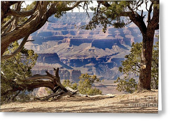 Geological Greeting Cards - Grand Canyon through the trees Greeting Card by Jane Rix