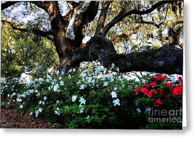 Mystical Landscape Greeting Cards - Grande Oak and Spring Azaleas Greeting Card by Anthony Ackerman