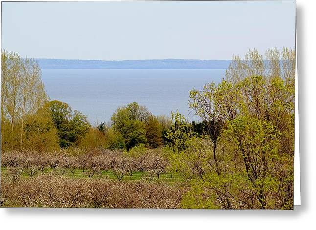 Fall Trees Greeting Cards - Grand Traverse Bay Greeting Card by James Lafnear