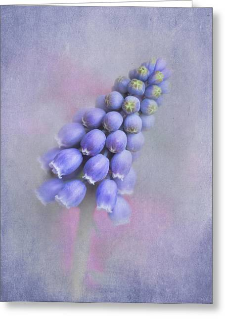 Blue Grapes Greeting Cards - Grape Hyacinth Greeting Card by David and Carol Kelly