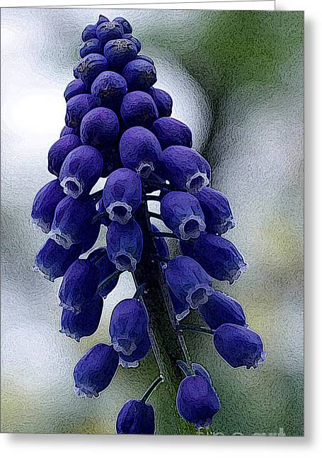 Purple Grapes Greeting Cards - Grape Hyacinth Greeting Card by David Bearden