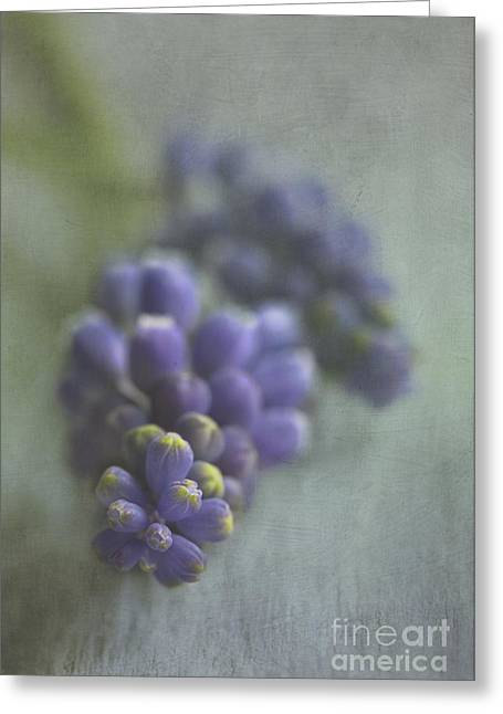 Blue Grapes Greeting Cards - Grape Hyacinth Greeting Card by Elena Nosyreva