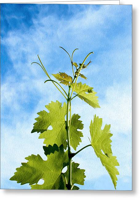 Blue Grapes Greeting Cards - Grape Leaves Greeting Card by Kathleen Horner